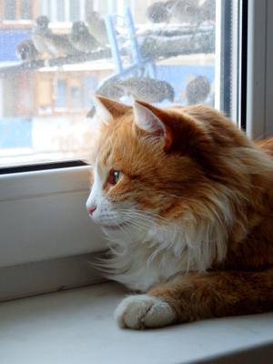 птичку жалко.. кот