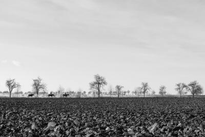Три одиноких всадника поле земля лошадь всадник черно-белое пашня