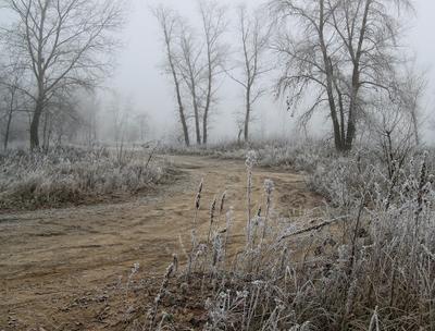 Ноябрьские туманы туман изморозь