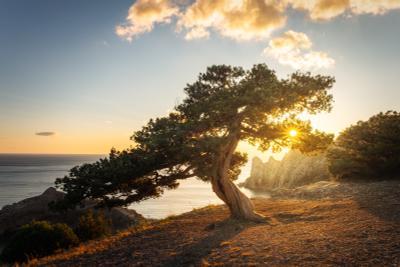 Танцуя с Солнцем закат крым юбк черноеморе новыйсвет осень