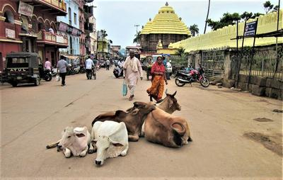 """""""Гау-мата"""", Индия индия пури корова"""