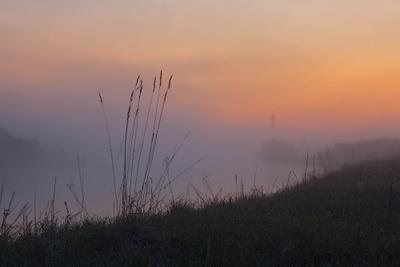 *** утро туман