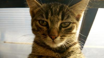 Котя котик кошка котенок