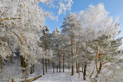 Зимний макияж. зима лес