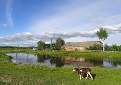 Село Сибирь лето село пейзаж