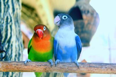 Ассмм Животные попугаи зоопарк день светло солнце яркость