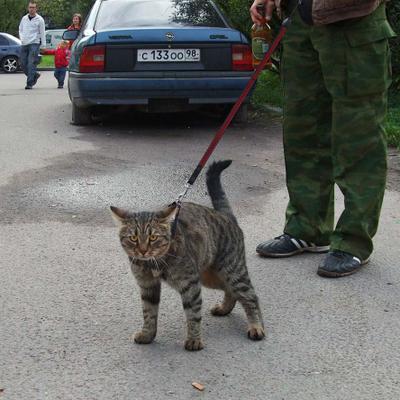 Наш ответ дамам с собачками кот кошка человек хозяин человек_и_кошка