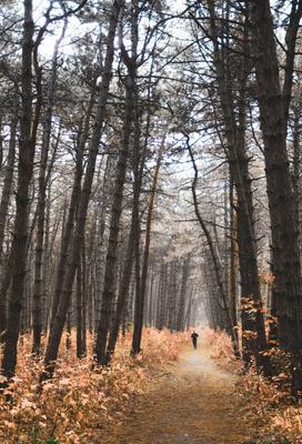 Лучшее место для карантина лес осень