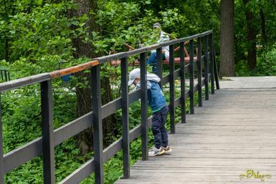*** ребёнок мост парк лето
