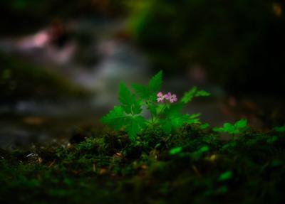лесной цветочек лес цветы
