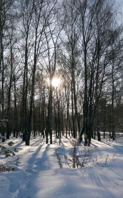 Сверкающий снег зима снег солнце смартфон