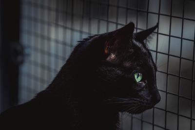 Кот Кот черный кот глаза