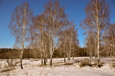 Приметы весны пейзаж природа март лес