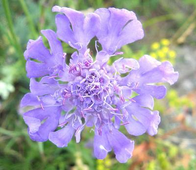 Фиолетовая игра природы цветок