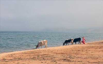 Четыре грации Байкал пляж коровы девушка фотосъёмка