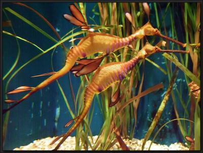 Sea Creatures Морские Создания