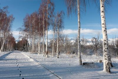Нежданный снег