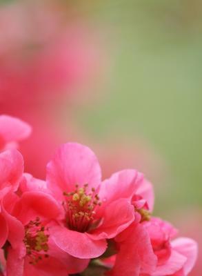 весенняя открытка цветы сакура цветение