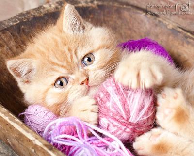 Котяркин котенок, кот, игра