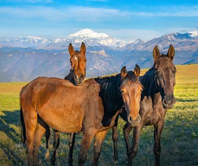 На фоне гор Кавказ Теберда Эльбрус Кавказский хребет весна путешествие горы горное пастбище лошадь лошади кони скот
