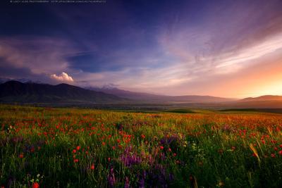 Королевство вечной Весны lazy_vlad lazyvladphoto nophotoshop bishkek kyrgyzstan landscape mountains poppies spring бишкек киргизия кыргызстан горы маки весна