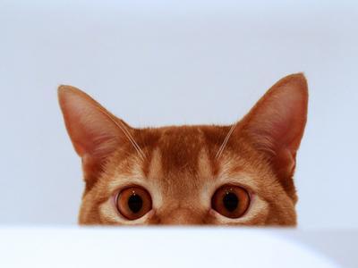 Shкодство кот шкод