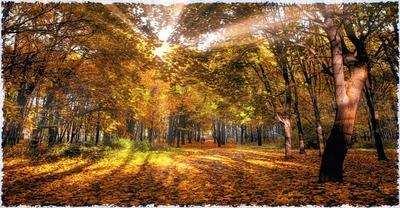 Свидание. парк осень парочка солнце природа