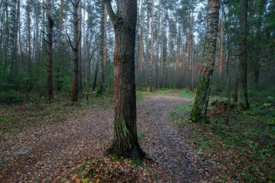 За деревьями леса не видно... лес осень тропинка