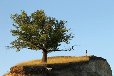 на краю земли природа дерево человек красота одиночество край земли