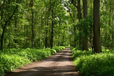 Буковый лес весной! весна лес зелень листва