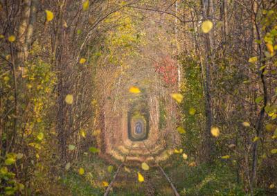 Листопад осень листья листопад тоннель любви Клевань природный из деревьев краски осени золотая