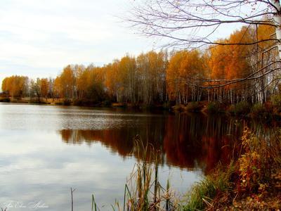 Осенние краски осень пруд пейзаж