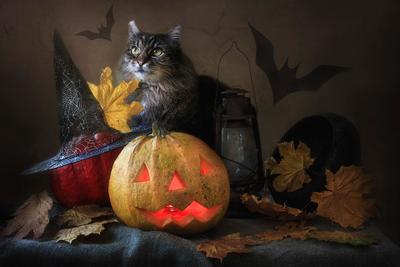 ***Хеллоуин домашние животные питомцы любимцы кошки кот Мейсон натюрморт хеллоуин