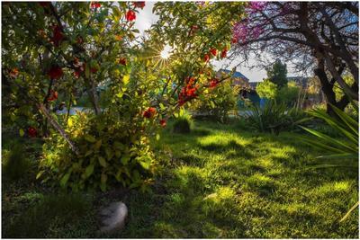 Весеннее солнце весна газон .зелень цветение кусты солнце трава