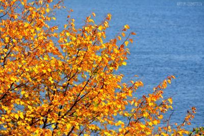 Золотая осень осень золотой природа вода