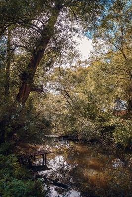 Липенка, у Троицкого храма река осень природа