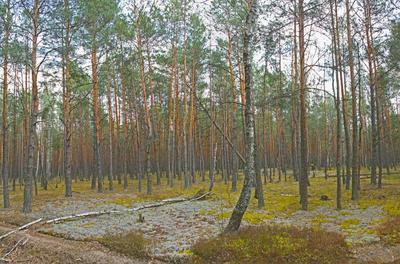 """Лесное настроение лес пейзаж заказник """"Прибужское Полесье"""""""