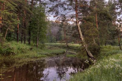 Летняя Лес река лето рассвет пейзаж
