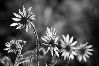 sunshine reggae 2015 россия canon пономарев природа вятка макро цвет свет боке цветы образ образы 600d eos EF50mmF 1.8