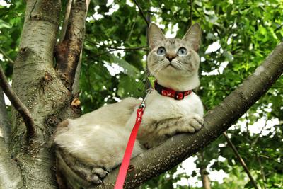 охотница красивая кошка лес деревья охотница