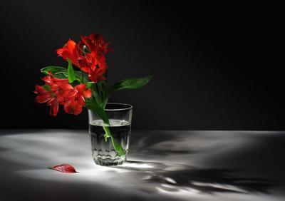 * цветы световая кисть тень свет