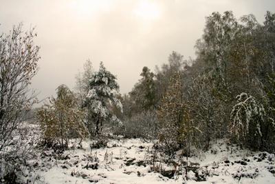 Первый снег - 2 деревья, лес, октябрь, осень, пейзаж, подмосковье, природа, снег