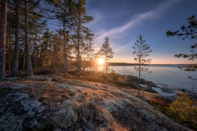 Ковер на скалах карелия ладога скалы деревья мох лишайник закат облака пейзаж природа