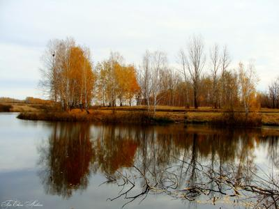 Осенний пруд осень пруд пейзаж