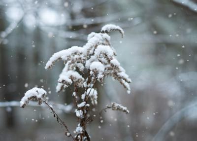 первый снег зима снег лес природа