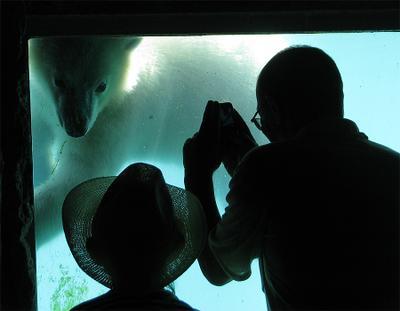 контакт 2 медвед