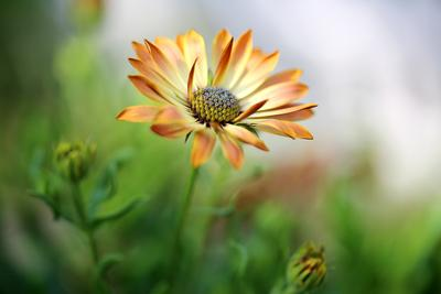 из лета цветы, лето,