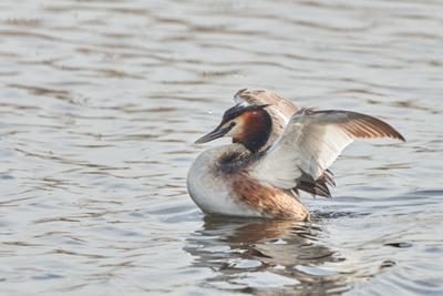 Позирует Птицы природа весна фотоохота