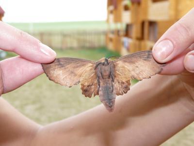 Бабочка бабочка насекомые