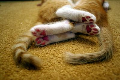 Синхронный сон сон кот кошка рыжий